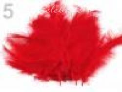 Pštrosie perie červené